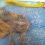 Нашли кота, Екатеринбург