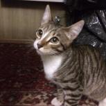 Найден кот, Екатеринбург