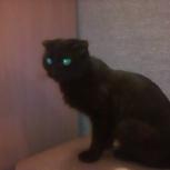 Найдена черная вислоухая кошка, Екатеринбург