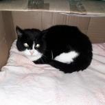 Найден черно-белый кот Уралмаш, Екатеринбург