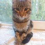 Найден кот камышового окраса, Екатеринбург