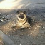 Кто потерял собаку, Екатеринбург