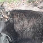 Найден кот на Ясной 36/1, Екатеринбург