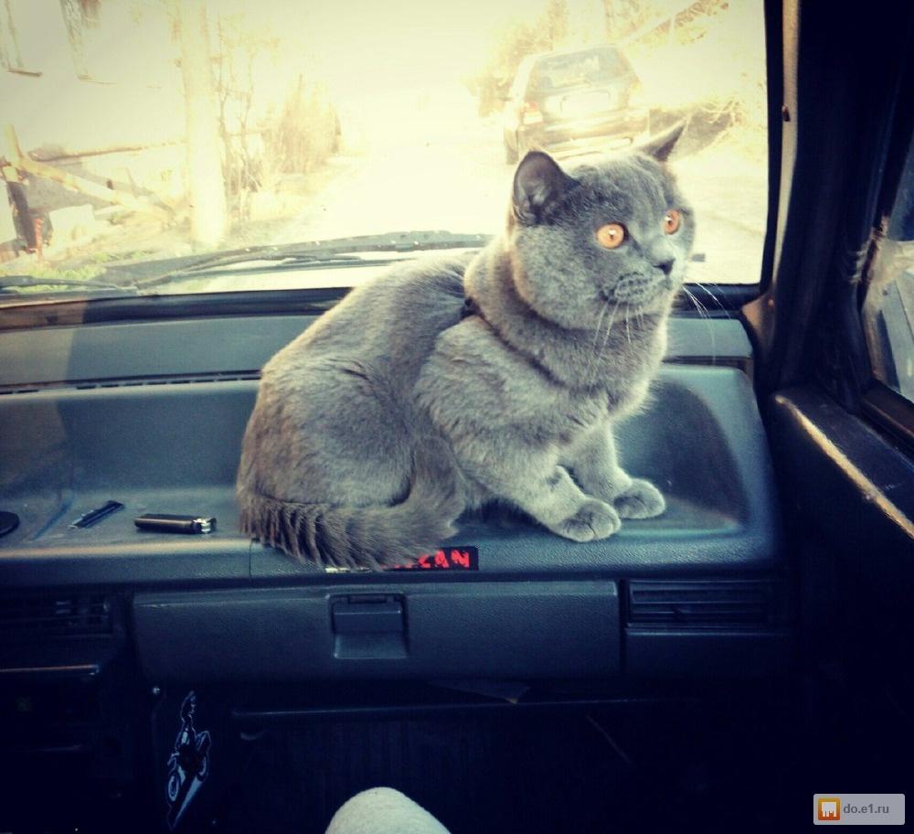 Вязка с котом екатер