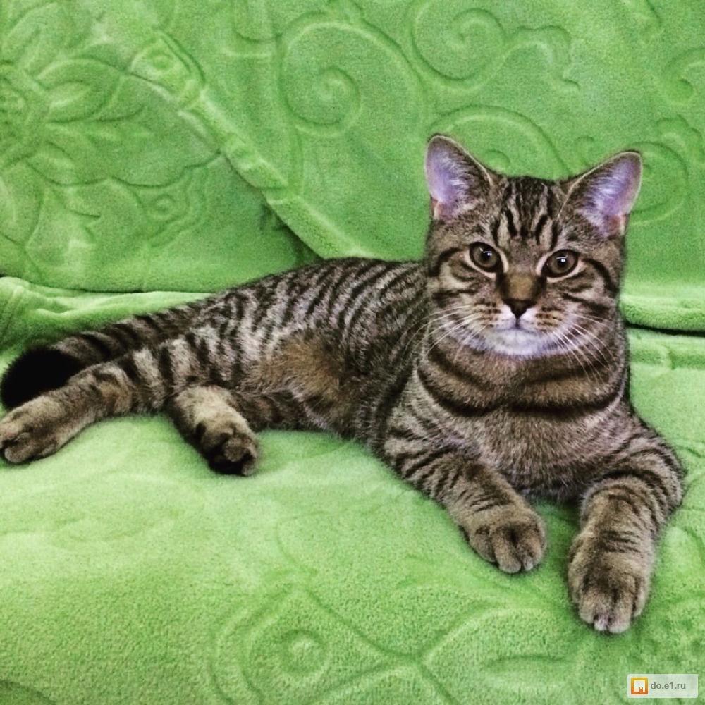 аллергия на кота и на кошку