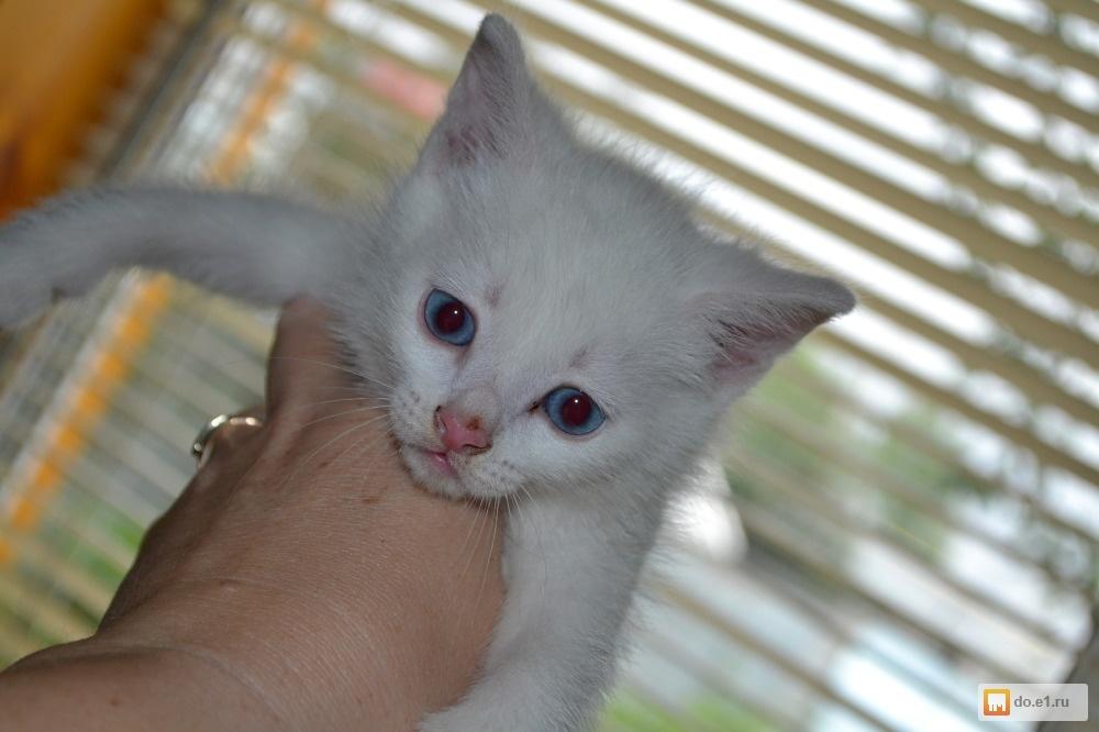 Черные Кошки Белые   rupinterestcom