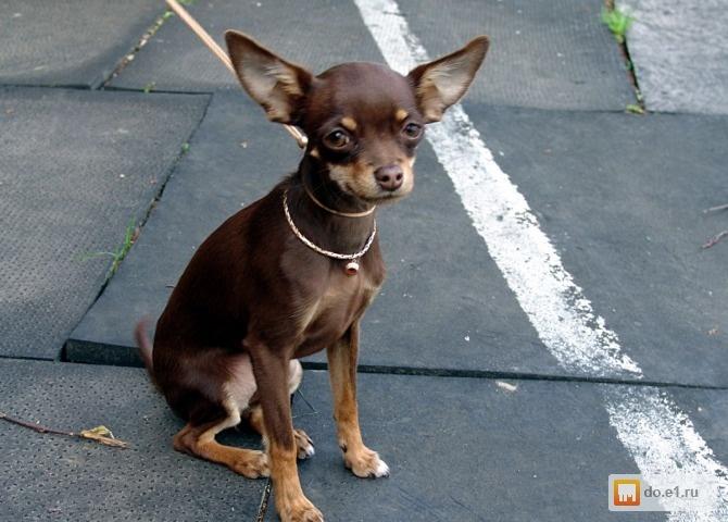 тортерер фото собаки