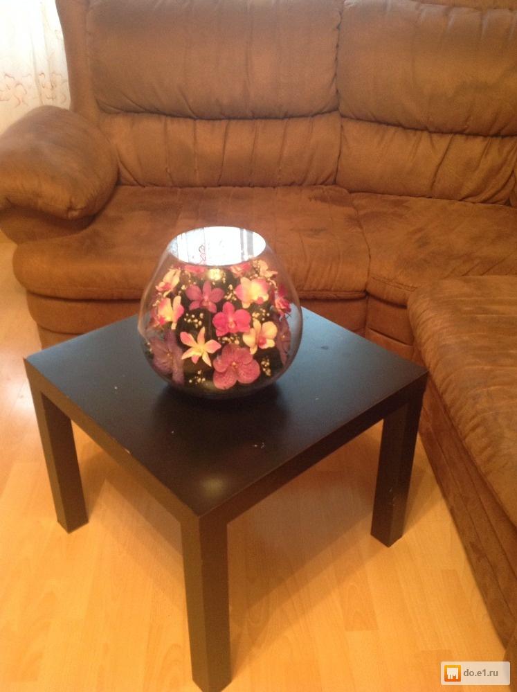 Живые камни цветы цена 3