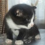 Отдам котенка в хорошие руки, Екатеринбург