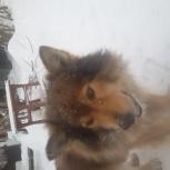 Собака потеряшка, Екатеринбург