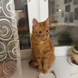 Найден рыжий кот в ошейнике, Екатеринбург