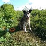 Замечательный молодой пес Афоня!, Екатеринбург