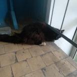 Найдет кот, Екатеринбург
