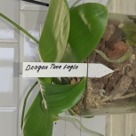 Продам орхидеи, Екатеринбург
