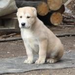 Собаки щенки, Екатеринбург
