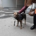 В районе Филармонии бегает щенок, Екатеринбург