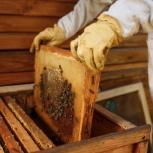 Продажа отводка пчёл, Екатеринбург