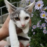 Кошечка Масяня ищет дом, Екатеринбург