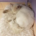 найдет белый кот виз екатеринбург, Екатеринбург