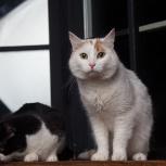 Взрослый ласковый котик, Екатеринбург