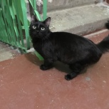 Найден чёрный кот, Екатеринбург