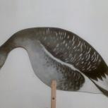 Профиля диких гусей для охоты, Екатеринбург
