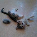 Котёнок, Екатеринбург