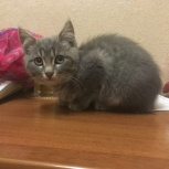 Найден котенок, отдадим добрым людям, Екатеринбург