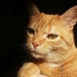 Пропал рыжий молодой кот. Уралмаш., Екатеринбург