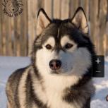 Помогите найти собак, Екатеринбург