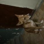Ищем хозяина собаки, Екатеринбург