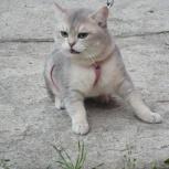 Шикарные котятки, Екатеринбург