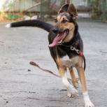Активная собачка Ляля ждёт любящую семью!, Екатеринбург
