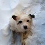 Прошу помощи в поисках белой собачки, Екатеринбург