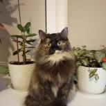Найдена кошка, Екатеринбург