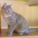 Потерялась кошка на Уралмаше, Екатеринбург