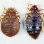Истребление клопов, муравьев и тараканов, Екатеринбург