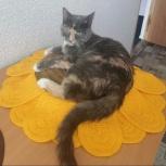 Ищем дом молоденькой кошке, Екатеринбург