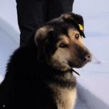 Большой пёс Палкаша в добрые руки, Екатеринбург