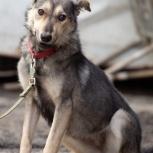 Собака «Волчонок» Сара рада найти хозяина!, Екатеринбург