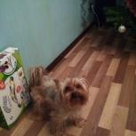 Пропала собака сегодня в 11.00, Екатеринбург