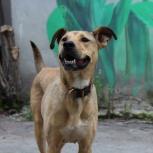Ищем хозяев собака, Екатеринбург