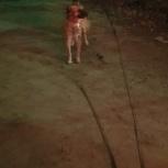 Замечена собака на 8 марта в 00.10, Екатеринбург