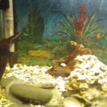 Продам аквариум, Екатеринбург
