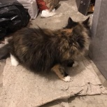 найдена трехцветная кошка, ул Высоцкого, Екатеринбург