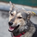Добрая собачка Сара в поисках дома, Екатеринбург