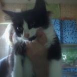 Котенок лева 2. 5 месяца   отдам в добрые руки, Екатеринбург
