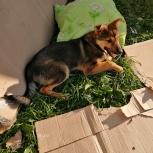 Бездомный пес, Екатеринбург