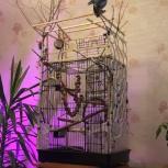 Клетка и манеж для попугая, Екатеринбург