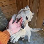 Собака Агата ищет дом, Екатеринбург